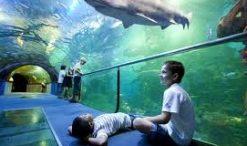 Aquarium et les enfants