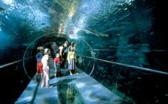 Le aquarium San Sebastian
