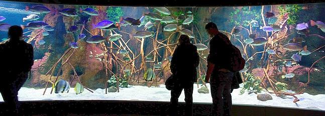 Pecera del Aquarium