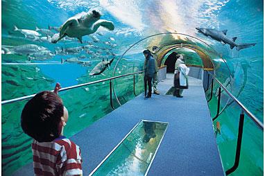 Crecen las visitas al Aquarium en 2011